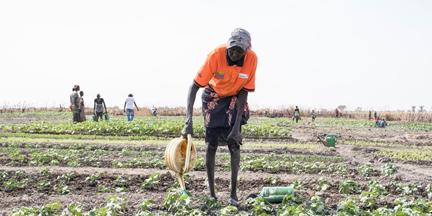La degradación de los medios y de las condiciones de vida, y el frágil acceso al agua y a las tierras cultivables aumentan la presión sobre los recursos naturales. / EP