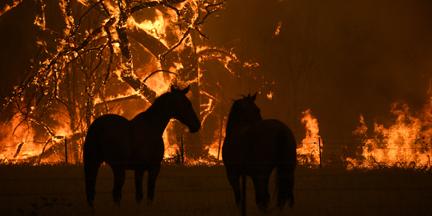 Incendios forestales como los de Australia han de presionar para tomar medidas contra los riesgos climáticos. / EP